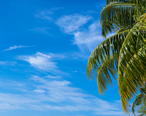 Summer beach background - sky and palm