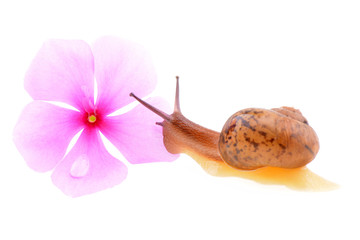 Snail with a purple flower