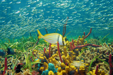 Colorful sea life underwater with shoal of fish