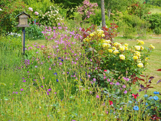 Garden with colorful flowers and a bird box France
