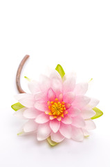 Lotus flower isolated white background