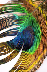 Abstract peacock feather detail