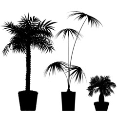 Interior palm trees design - detailed vector