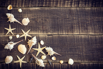 Seashells on wood