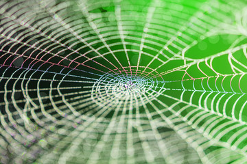 Wide Web in the early morning in summer
