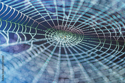 Leinwandbild Motiv Wide Web in the early morning in summer