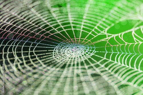 Wide Web we wczesnych godzinach porannych w lecie