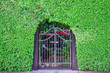 Classical design black wrought iron gate in a beautiful green ga