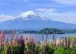 大石公園から見る富士