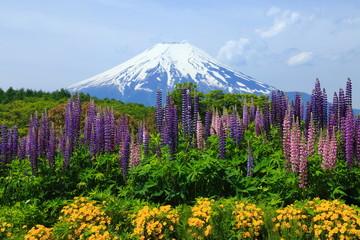 富士山とルピナス