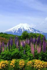 富士とルピナスの花