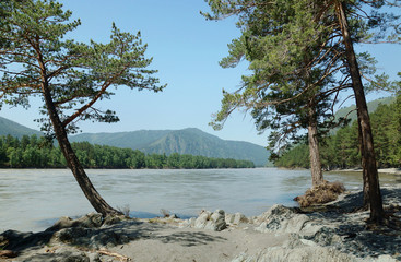 Beautiful summer landscape with pine trees on the river bank