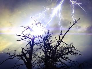 Blitzeinschlag in einen Baum - Thunderstorm