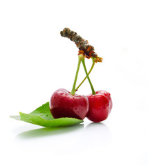 Cherries on the white background