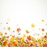 Fototapety Vector Illustration of Autumn Leaves