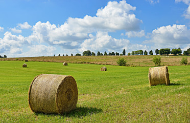Typical agricultural landscape of Walloon, Belgium in summer