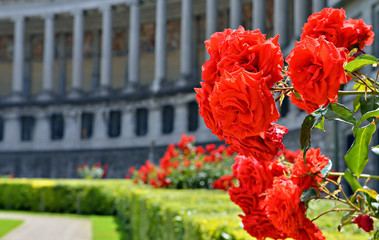 Roses on front of Triumph Arch in Cinquantennaire Parc