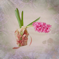Card with Hyacinth Flower on pastel background