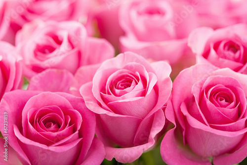 Deurstickers Roses beautiful pink rose flowers background