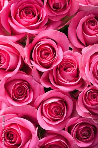 Zdjęcia na płótnie, fototapety, obrazy : beautiful pink rose flowers background