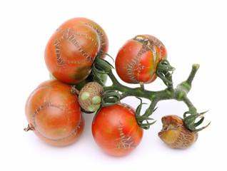 病気のトマト