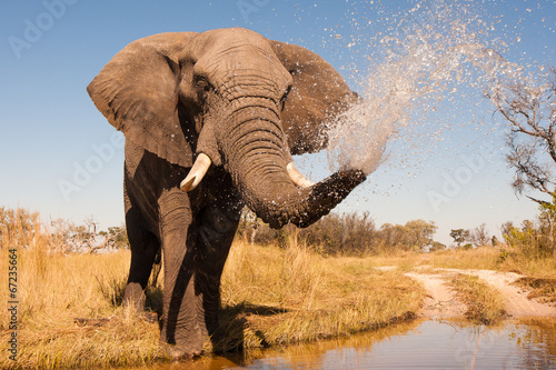 Canvas Zuid Afrika Elephant
