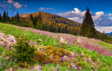 Colorful morning landscape in the Carpathian mountains.