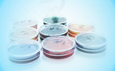 Color liquid in old plastic petri dishes