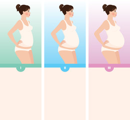 Three trimesters of pregnancy