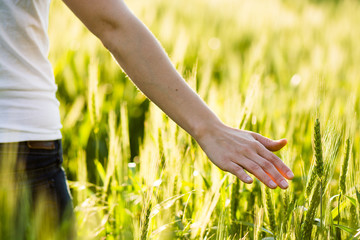 Girl hand touching wheat. Fresh harvest.