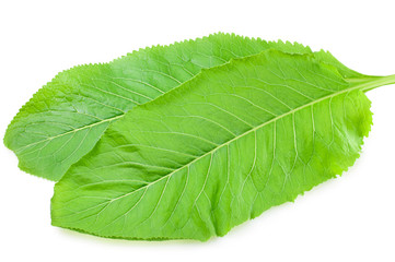 fresh horseradish leaves on a white