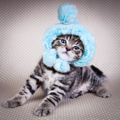 Little kitten wearing  funny hat