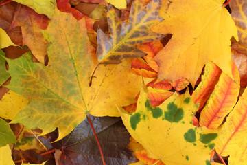 Tapis de feuilles mortes colorées