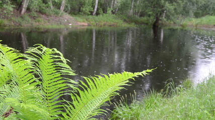fern leaves in background of village pond glittering raindrops