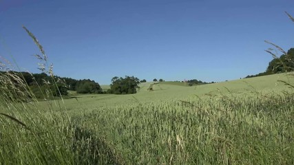summer landscape with wheat in the foreground