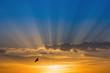 Leinwandbild Motiv Bird over rays of light over blue sky