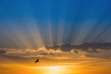 Bird over rays of light over blue sky