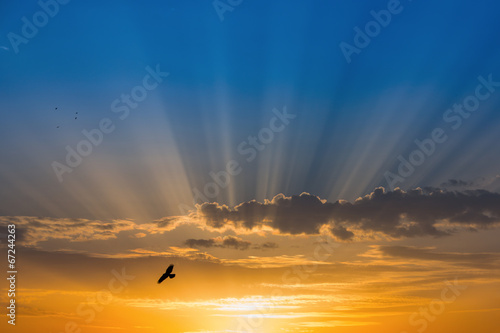 Tuinposter Zonsondergang Bird over rays of light over blue sky