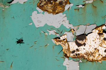 background of cracked surface plate and black fly