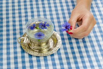 hand hold fresh cornflower blossom. herbal tea cup