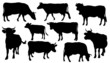 cow silhouettes - 67246226