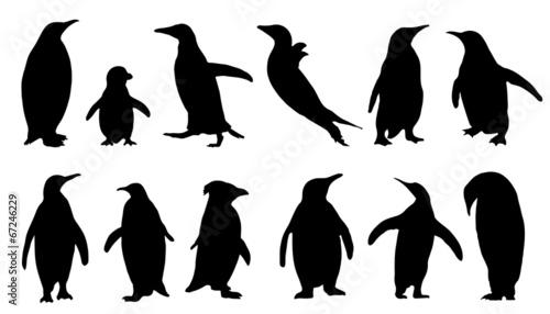 penguin silhouettes - 67246229