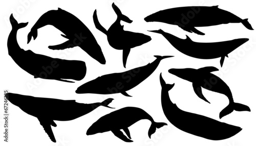 whale silhouettes - 67246235