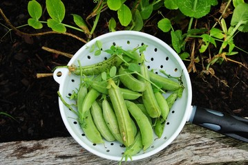 A Strainer Filled with Fresh Organic Pea Pods