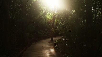 Sun light in jungle footpath