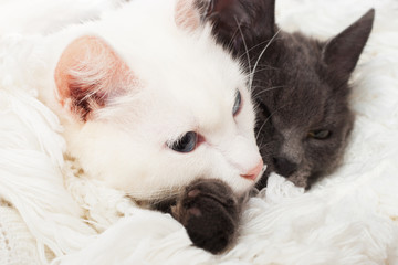 two cats lying on a white veil