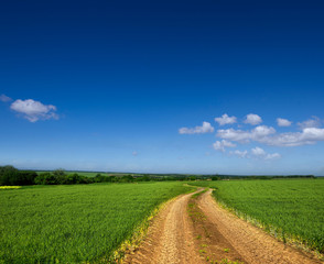 Country road through a green field