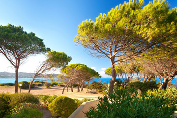 Pinien am Strand von Sardinien