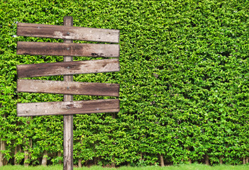 Wooden sign with tree plant