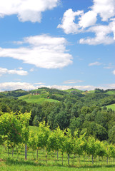 Südsteirisches Weinland bei Leutschach nahe Slowenien